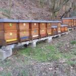 Včely a včelaři