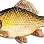 Zpráva rybářského spolku pro rok 2015