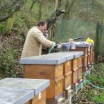 Včely, med, včelaři.