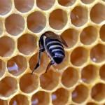 Včelařská velikonoční výstava